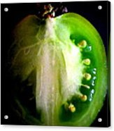 Heirloom Tomato Acrylic Print by Maria Scarfone