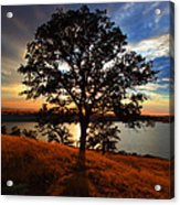 Hensley Tree Acrylic Print
