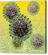 Hepatitis B Virus Particles Acrylic Print by Russell Kightley