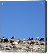 Herd In The Atlas Mountains 02 Acrylic Print