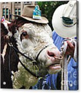 Hereford Bull With Akubra Hat In Hyde Park Acrylic Print by Kaye Menner