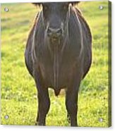 Here's The Beef Acrylic Print