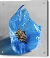 Heroin Powder Acrylic Print