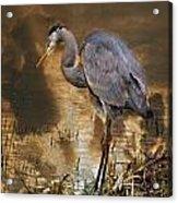 Heron Bronze Acrylic Print