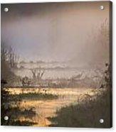 Heron Dawn Acrylic Print