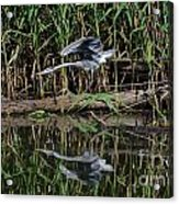 Heron Reflected In The Water Acrylic Print