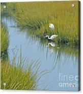 Heron Reflections Acrylic Print