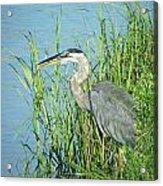 Heron Rockefeller Wma La Acrylic Print