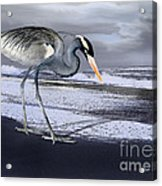 Heron Taking His Afternoon Beach Walk Acrylic Print by Danuta Bennett