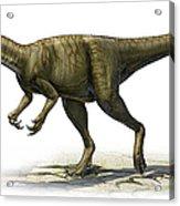 Herrerasaurus Ischigualastensis Acrylic Print