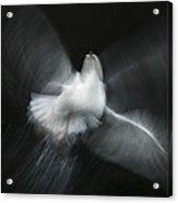 Herring Gull Abstract Acrylic Print