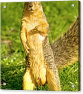Hey Buddy Have You Seen My Nuts Acrylic Print by James Marvin Phelps