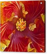 Hibiscus Center Acrylic Print