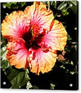 Hibiscus Flower Acrylic Print by Lisa Phillips