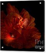 Hibiscus Glow Acrylic Print