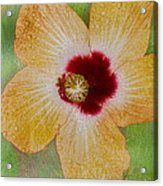 Hibiscus Gold And Red Acrylic Print