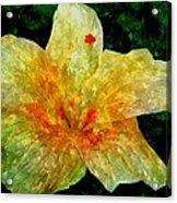 Hibiscus Hiwc Acrylic Print