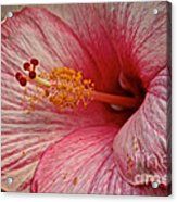 Hibiscus Pink Acrylic Print