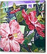 Hibiscus Seductris Acrylic Print