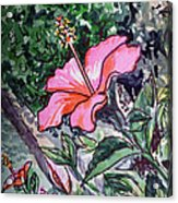 Hibiscus Sketchbook Project Down My Street  Acrylic Print
