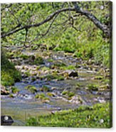 Hidden Creek Acrylic Print