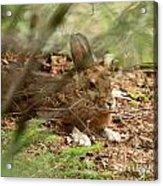 Hidden Hare Acrylic Print