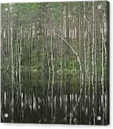 High Waters In A Forest Of Evergreens Acrylic Print