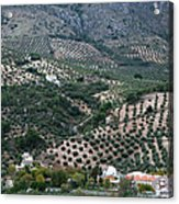 Hills Dales And Vineyards Acrylic Print by Lorraine Devon Wilke