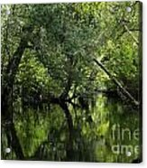 Hillsborough River Reflections Acrylic Print