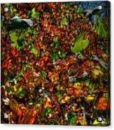 Hillside Colors Acrylic Print