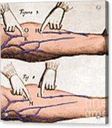 Historical Illustration Of Blood Vessels Acrylic Print