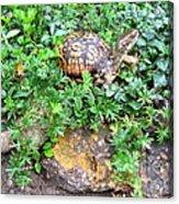 Hitchin A Ride On A Turtle  Acrylic Print
