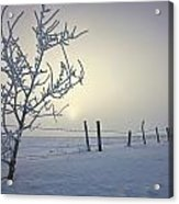 Hoar Frost Covering Trees And Barbed Acrylic Print
