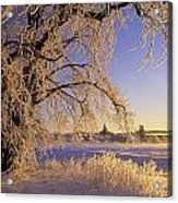 Hoar Frost On Tree, Milton, Prince Acrylic Print