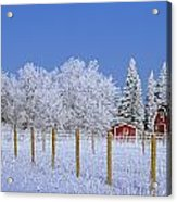 Hoarfrost On Trees Around Red Barns Acrylic Print