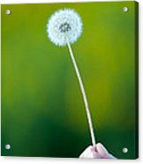 Holding On To The Last Days Of Summer Acrylic Print