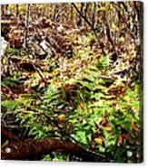 Holding Out Enjoying The Suns Warmth Acrylic Print