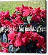 Holiday Greetings With Poinsettias Acrylic Print