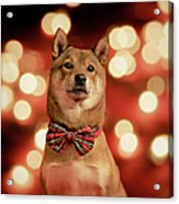 Holiday Outfit Acrylic Print by DancingShiba