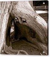 Hollow Tree Acrylic Print