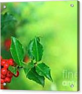 Holly Branch Acrylic Print