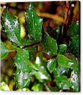 Holly Daze Dew Drops Acrylic Print