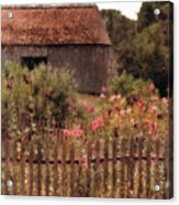 Hollyhocks And Thatched Roof Barn Acrylic Print