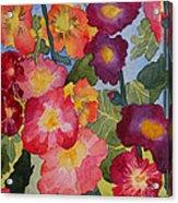 Hollyhocks In Bloom Acrylic Print by Kimberlee Weisker