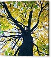 Homage To Georgia O'keefe Acrylic Print