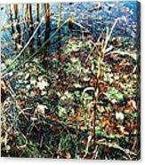 Homage To Monet Acrylic Print by Todd Sherlock