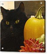 Black Cat And Pumpkin Acrylic Print
