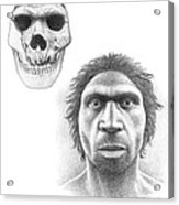 Homo Heidelbergensis Skull And Face Acrylic Print