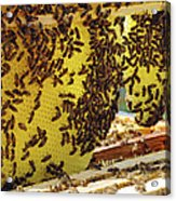 Honey Bees On A Beehive And Honeycombs Acrylic Print