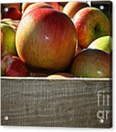 Honey Crisp Acrylic Print by Susan Herber